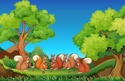 Vijf eekhoorns die okkernoten in park eten Royalty-vrije Stock Afbeeldingen