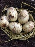 Vijf eieren in een nest Royalty-vrije Stock Afbeeldingen