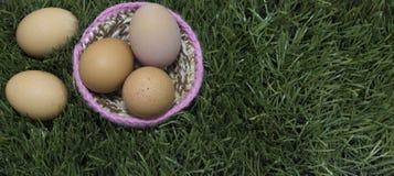 Vijf eieren legt op nest op gras royalty-vrije stock fotografie