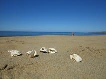Vijf eieren van Loggerhead schildpad op therstrand op Cyprus stock afbeelding