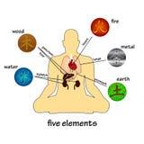 Vijf elementen en menselijke organen Royalty-vrije Stock Afbeeldingen