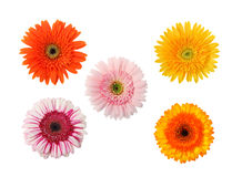 Vijf geïsoleerde bloemen Royalty-vrije Stock Foto's