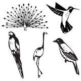 Vijf gestileerde vogelillustraties Stock Foto's