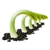 Vijf groene spruiten Stock Foto