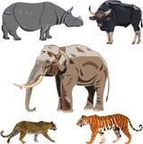 Vijf grote wilde dieren in India. Stock Foto