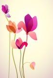 Vijf heldere wilde bloemen Stock Afbeelding
