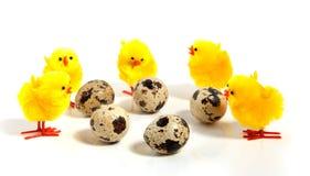 Vijf kleine gele kuikens en eieren Stock Fotografie