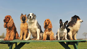 Vijf kleine honden Stock Foto's