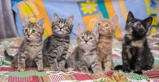 Vijf kleine katjes op een heldere deken stock foto