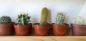 Vijf kleine succulente cactusinstallaties op een plank stock afbeelding