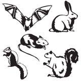 Vijf kleine zoogdieren Stock Afbeeldingen