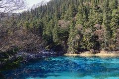 Vijf-kleur Vijver, Jiuzhaigou Stock Foto's