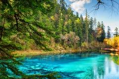 Vijf kleurden Pool met azuurblauw water onder hout royalty-vrije stock fotografie