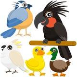 Vijf kleurrijke leuke vogels Stock Fotografie