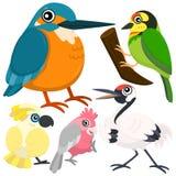 Vijf kleurrijke leuke vogels Stock Afbeeldingen