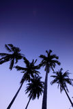 Vijf Kokospalmen op het Strand Stock Afbeeldingen