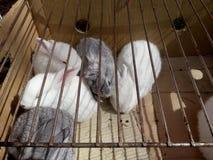 Vijf konijnen slapen op de zonneschijn stock afbeeldingen