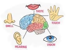 Vijf menselijke betekenissen onderwijsaffiche stock illustratie