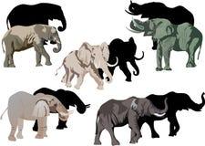 Vijf olifanten en zijn schaduwen Stock Foto's