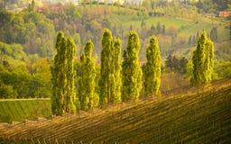 Vijf Populieren in zon, het gebieds van de Zuid- wijnstraat Stiermarken, wijnland De bestemming van de toerist Gazebo in het hout royalty-vrije stock fotografie