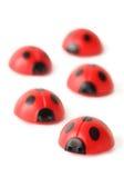 Vijf rode kleine lieveheersbeestjes die isoleren kruipen Stock Fotografie
