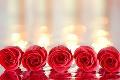 Vijf rode rozen in een lijn met bezinning Stock Foto
