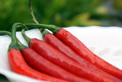 Vijf rode Spaanse pepers Stock Foto's