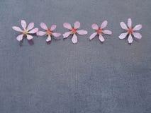 Vijf roze bloemen op een grijs close-up als achtergrond stock afbeelding