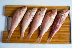 Vijf ruwe rode vissen Stock Foto
