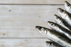 Vijf sardines Stock Foto's