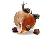 Vijf slakken en overzeese cockleshell Stock Fotografie