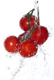 Tomaten op een tak onder water op geïsoleerd, Royalty-vrije Stock Afbeelding