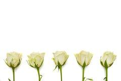 Vijf witte rozen regelt in een lijn met een exemplaarruimte Royalty-vrije Stock Foto's