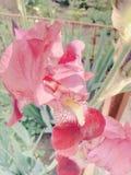 vijftig schaduwen van roze Royalty-vrije Stock Afbeelding