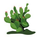 Vijgcactus royalty-vrije illustratie