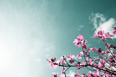 Vijgeboom, artistieke kleuren van aard Royalty-vrije Stock Foto