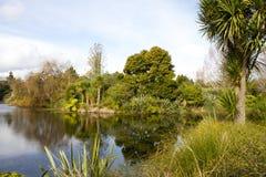 Vijver bij de Botanische Tuin van Auckland Royalty-vrije Stock Foto's