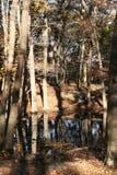 Vijver in bos Stock Afbeeldingen