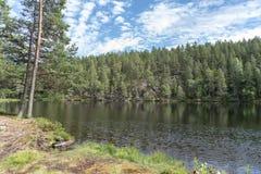 Vijver in bos in Zweden Royalty-vrije Stock Foto
