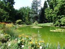 Vijver in de botanische tuin stock afbeelding