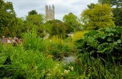 Vijver in de Engelse tuin Royalty-vrije Stock Afbeeldingen