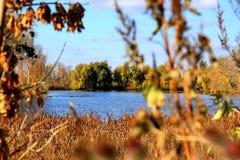 Vijver in de herfst Stock Fotografie
