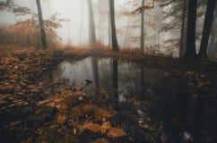 Vijver in de herfstbos met mist royalty-vrije stock foto
