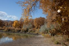 Vijver door Autumn Cottonwoods wordt omringd dat Royalty-vrije Stock Foto