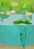 Vijver ecosytem royalty-vrije illustratie
