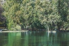Vijver in een park met groene bomen en eenden Royalty-vrije Stock Foto's