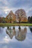 Vijver en Bomen royalty-vrije stock afbeelding