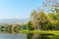 Vijver en Boom Forest Landscape stock foto's