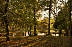 Vijver en boom in park met schaduwen stock foto