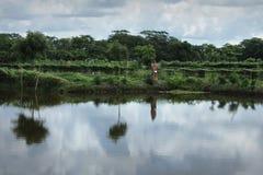 Vijver en plantaardige duivel in Khulna, Bangladesh royalty-vrije stock fotografie